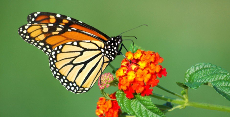 Journey to Mexico's butterfly sanctuaries and stand among hundreds of millions of monarchs as they complete their remarkable migration.