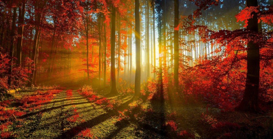 autumn_red_forest-2880x1800